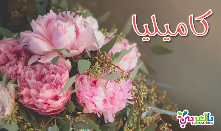 معنى اسم كاميليا - أجمل أسماء البنات من وحي الزهور