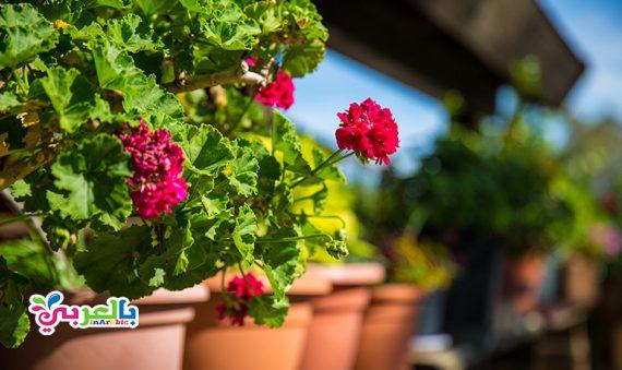 معلومات عن الزهور وأنواعها