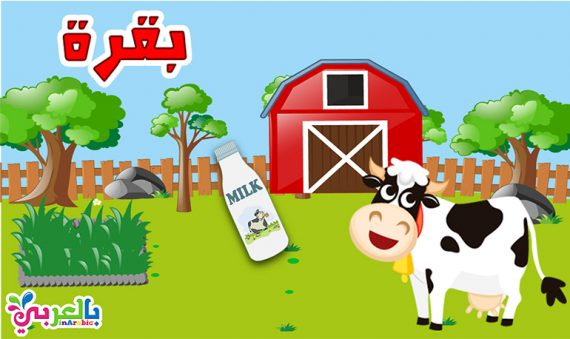 معلومات عن البقرة للاطفال