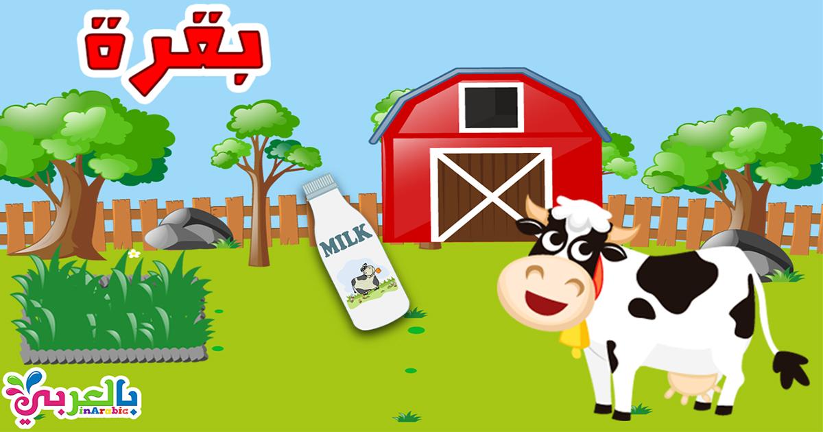 معلومات عن البقرة للاطفال في هذا الفيديو تعرف على البقرة وماذا تأكل Cow For Kids