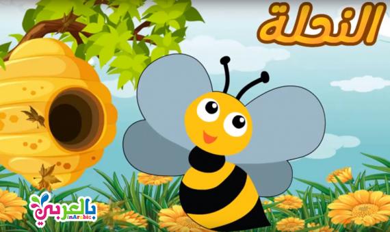 تعليم الرسم للاطفال رسم نحلة