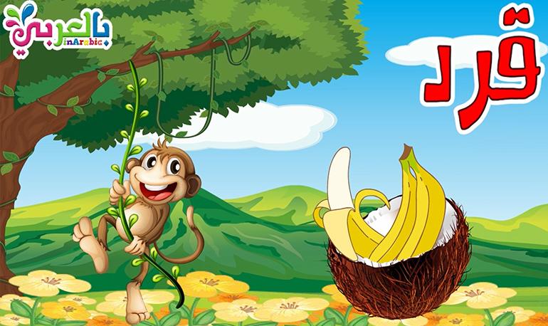 معلومات عن القرد للاطفال