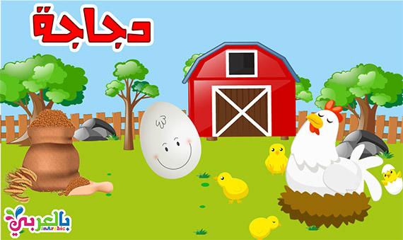 معلومات عن الدجاجة للاطفال