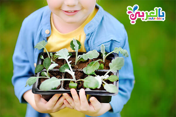 تعلم زراعة النباتات في المنزل