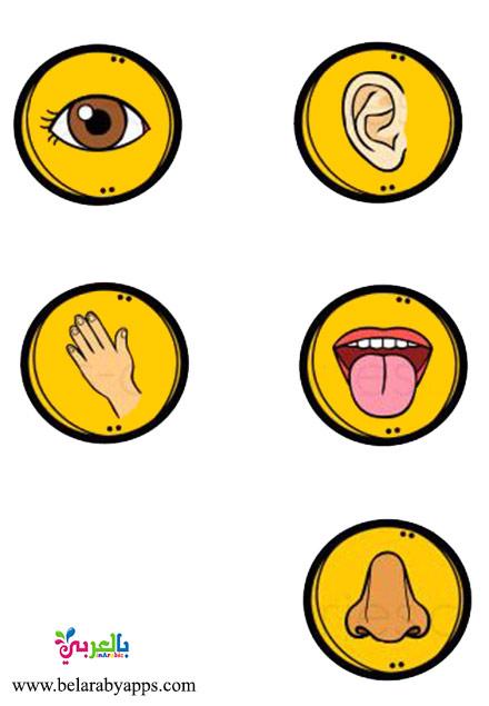 لعبة الحواس الخمسة للاطفال :: اشغال يدوية