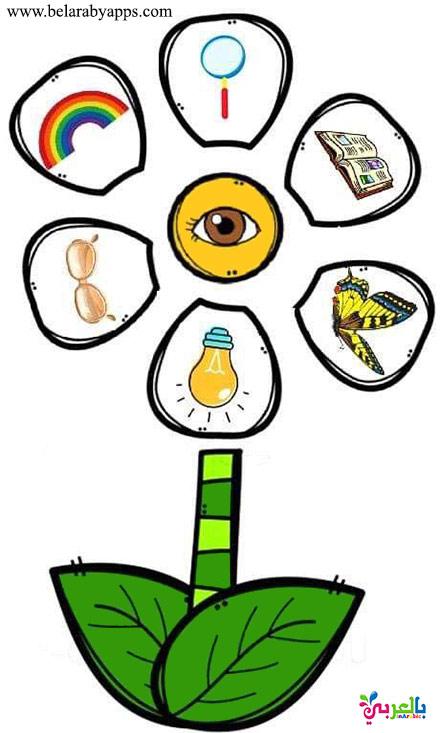 حاسة البصر - لعبة الحواس الخمسة للاطفال