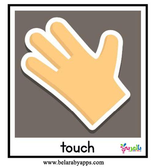 بطاقات الحواس الخمسة بالإنجليزي للأطفال