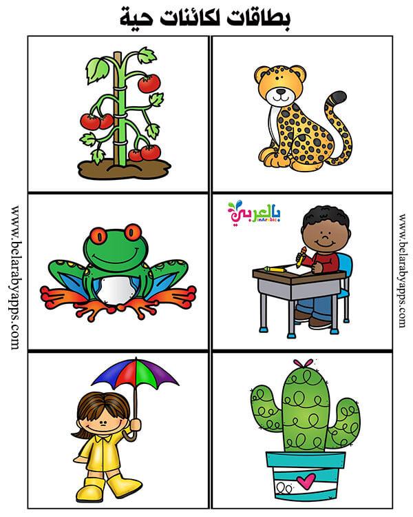 بطاقات الكائنات الحية والغير حيه للاطفال