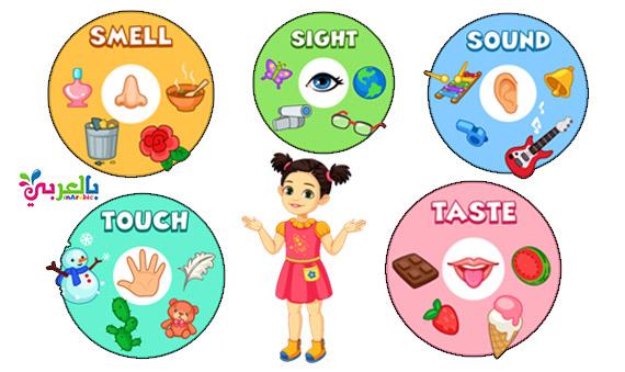 بطاقات تعليم الأطفال الحواس الخمس بالانجليزي