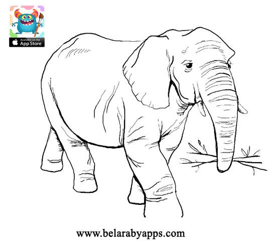 انشطة بمناسبة المولد النبوي - printable Islamic coloring pages for kids