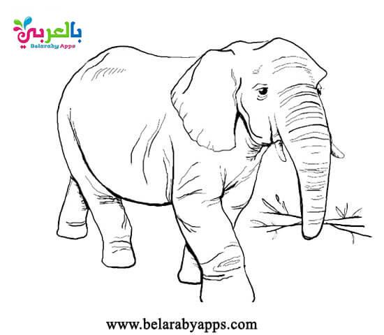 نشاط تلوين فيل لاطفال الروضة بمناسبة المولد النبوي