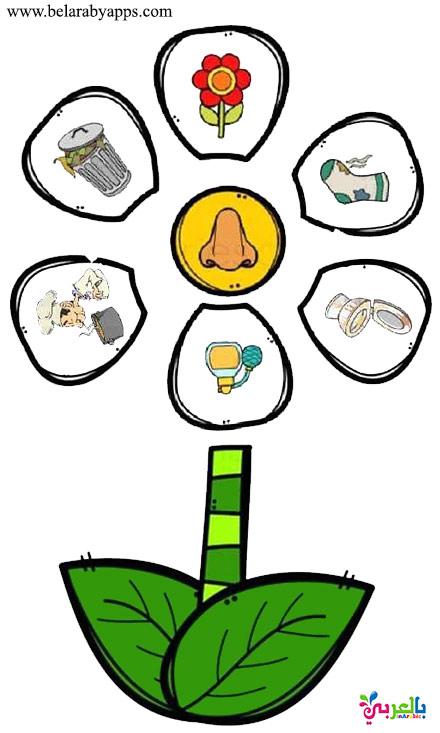 اوراق عمل لعبة منتسوري عن الحواس الخمس للاطفال