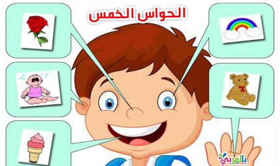 انشطة عن الحواس الخمس للأطفال :: وسائل تعليمية للروضة