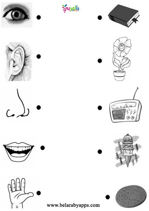 صور اسئلة عن الحواس الخمس للطباعة