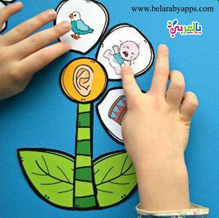 ضع صورة العين المعبرة عن حاسة البصر و اجعل طفلك يضع الصورة المميزة عن حاسة البصر كما بالصورة