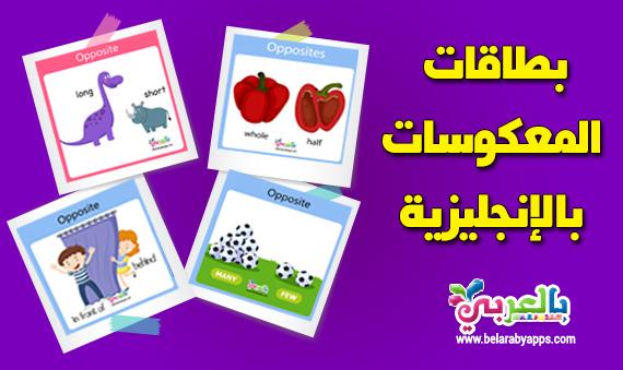 بطاقات المعكوسات بالانجليزية :: وسائل تعليمية حديثة بالصور