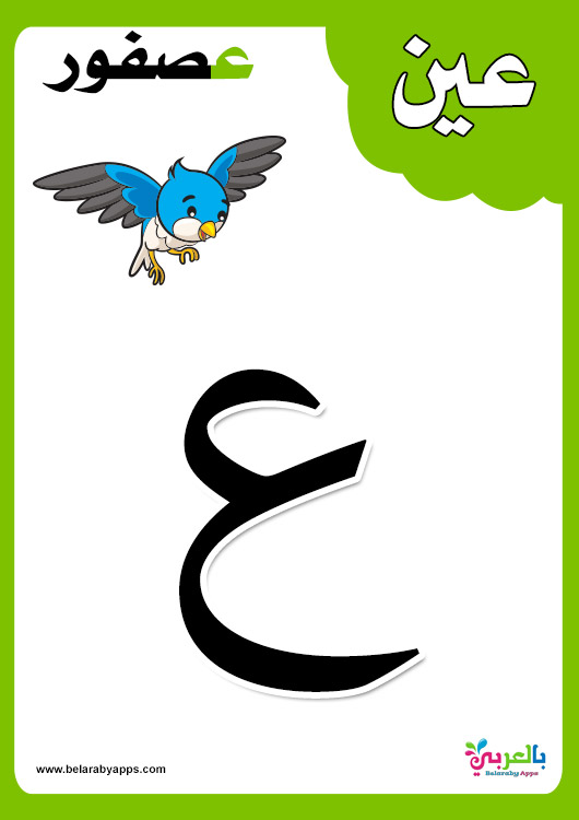 بطاقات الحروف العربية الأبجدية