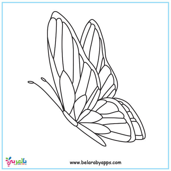 printable butterfly pictures