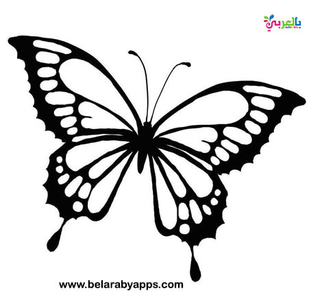 butterfly tattoo designs - butterfly Art Drawing