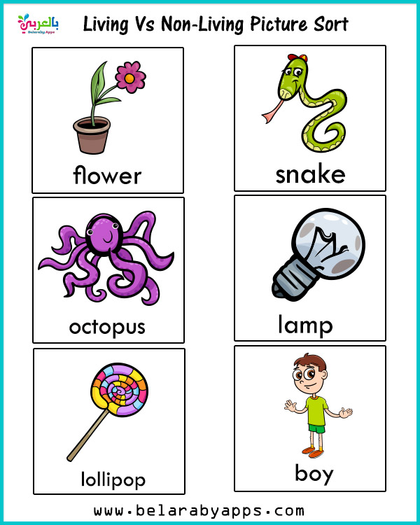 game living and non living things - living vs nonliving activities for kindergarten