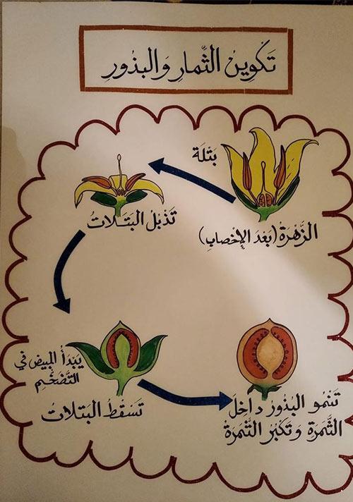 تكوين الثمار والبذور - افكار وسائل تعليمية لمادة العلوم ابتدائي
