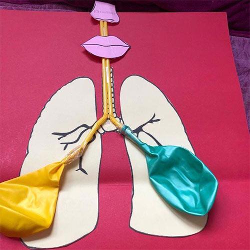 طريقة عمل مجسم القفص الصدري