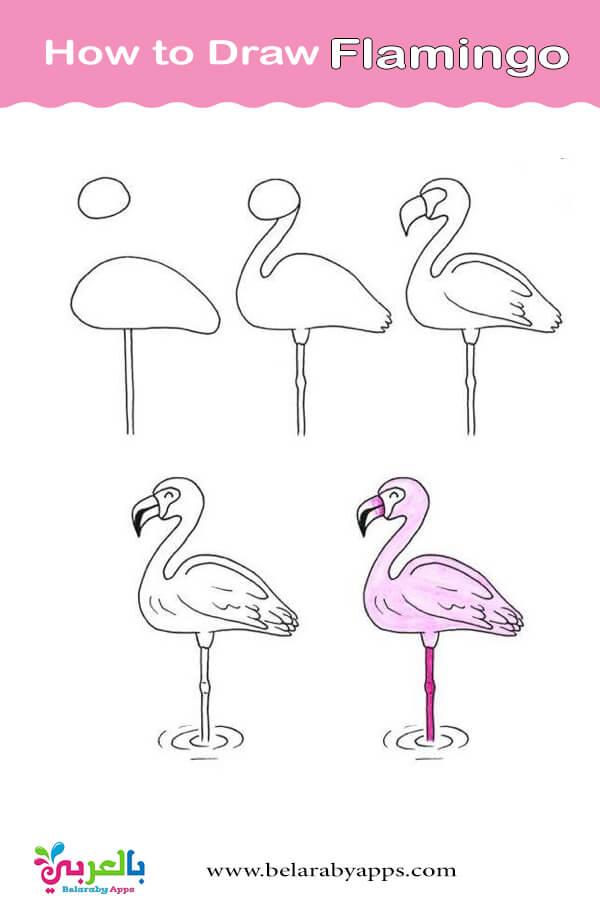 كيفية رسم طائر الفلامنجو بالخطوات