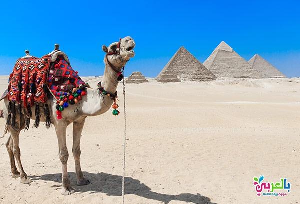 بحث عن السياحة في مصر .. خطوات كتابة البحث العلمي للابتدائية
