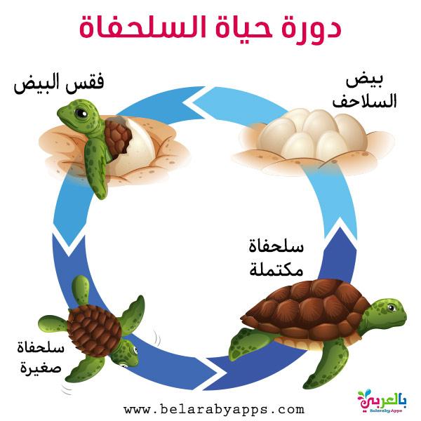 رسم دورة حياة الحيوانات للاطفال