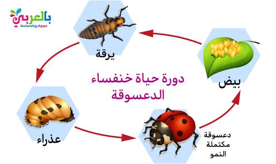 رسم دورة حياة الحيوانات للاطفال - مراحل نمو الحيوان بالصور