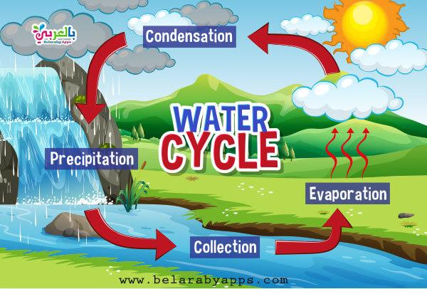 رسم دورة الماء في الطبيعة بالانجليزية