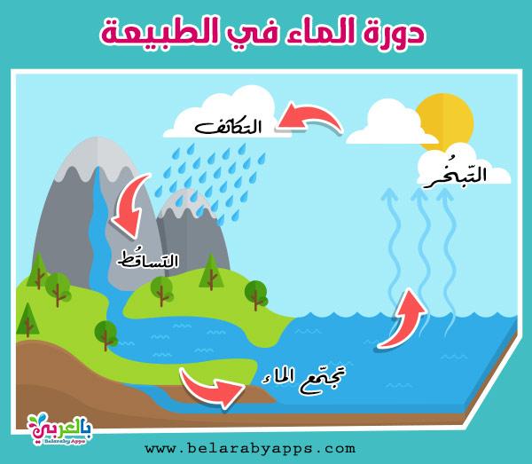أهمية دورة الماء في الطبيعة