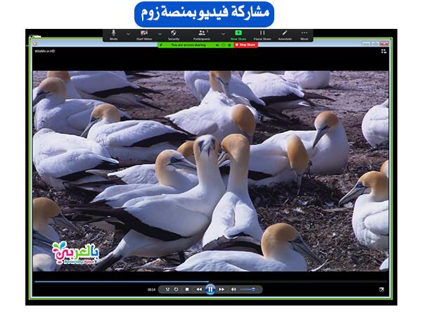 عرض الفيديو على الشاشة في زووم