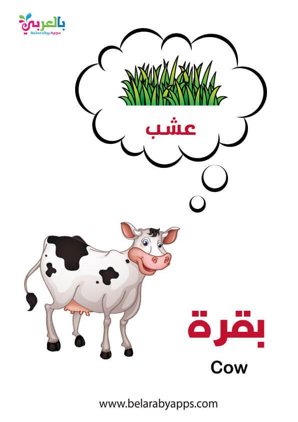 ماذا تاكل حيوانات المزرعة .. وحدة حيواناتي رياض الاطفال