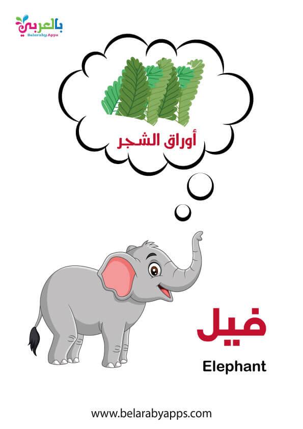 رسومات حيوانات الغابة ملونة .. الفيل