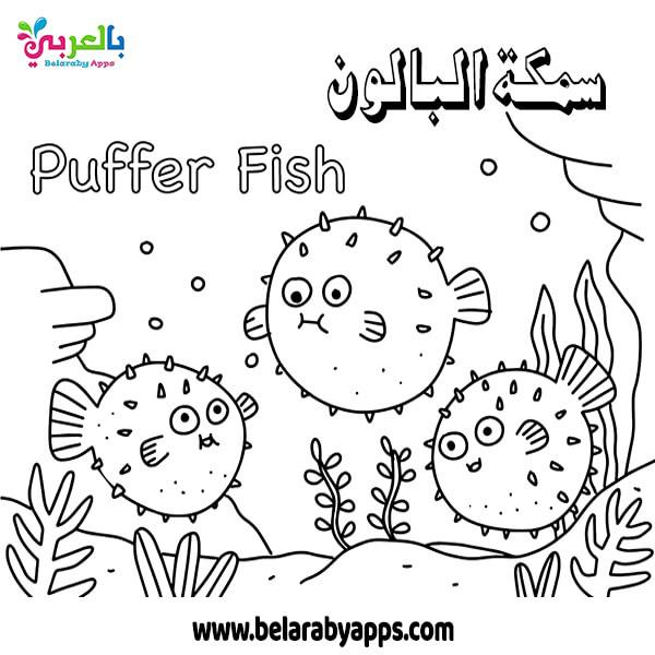 رسمة سمكة البالون للتلوين Puffer Fish