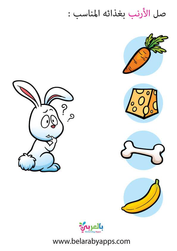درس غذاء الحيوانات .. غذاء الأرنب