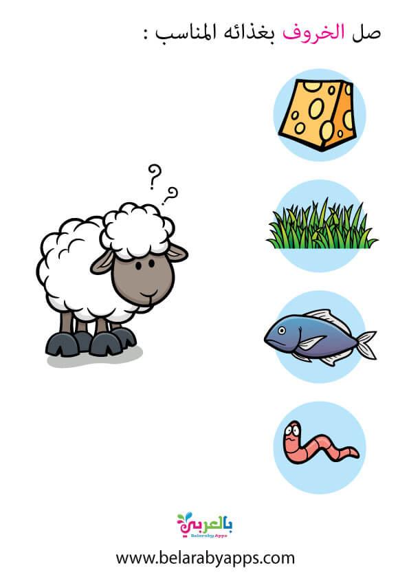 غذاء الحيواناتلرياض الاطفال