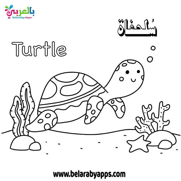 اوراق عمل تلوين الكائنات البحرية - سلحفاة Turtle
