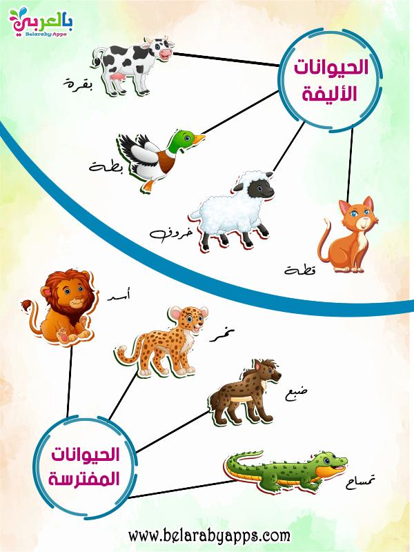 بالصور الحيوانات الأليفة والمفترسة للاطفال .. انفوجرافيك