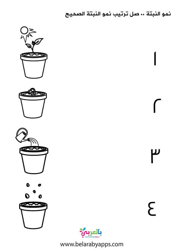 أوراق عمل مراحل نمو النبات لرياض الأطفال