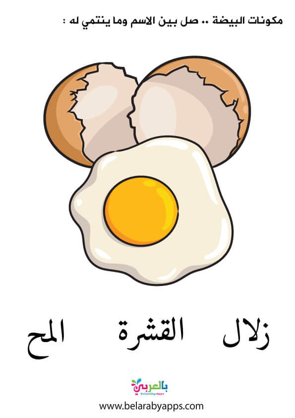 ورقة عمل عن مكونات البيض للاطفال