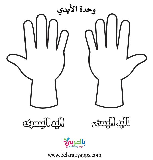 التعرف على اليد .. اعلان وحدة الأيادي لرياض الاطفال