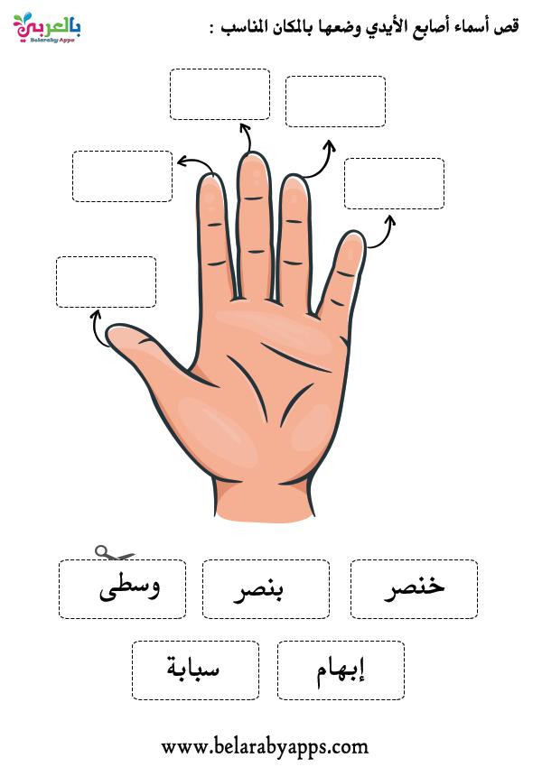 نشاط أسماء الأصابع .. وحدة الأيدي لرياض الأطفال