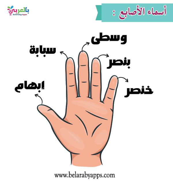 بالصور أسماء أصابع اليد للأطفال