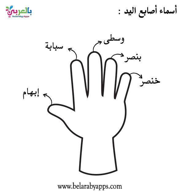 ورقة عمل اسماء الأصابع لرياض الأطفال