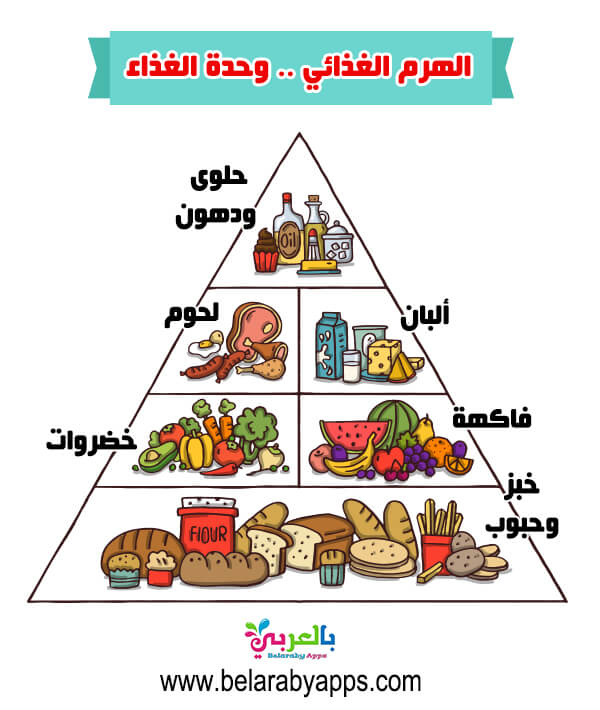 ما هو الهرم الغذائي موضوع 11