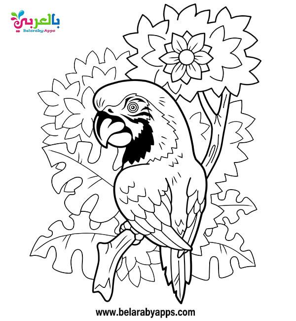 رسومات تلوين طيور للاطفال
