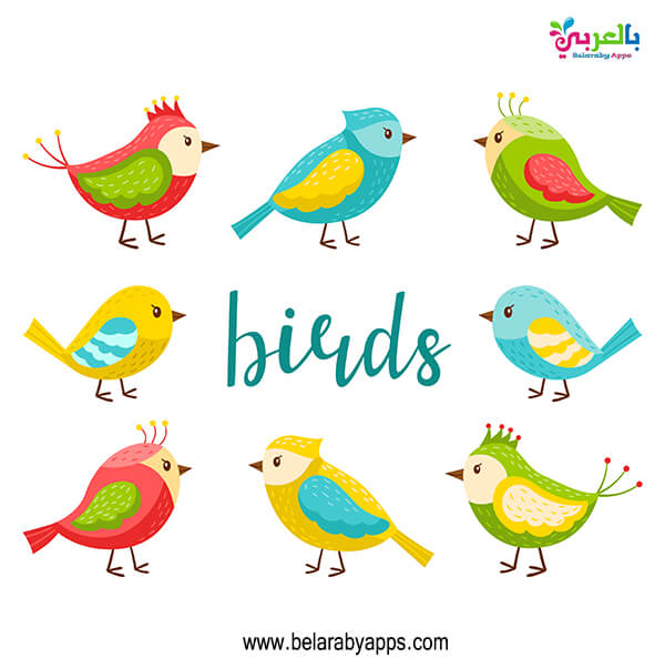 رسومات عصافير ملونة للاطفال