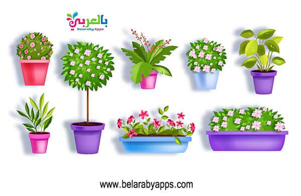 صور زهور الربيع